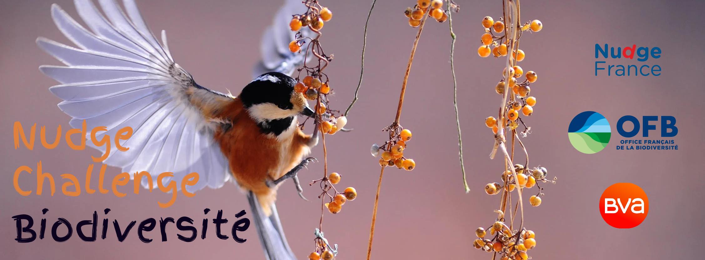 Image-nudge-challenge-biodiversité